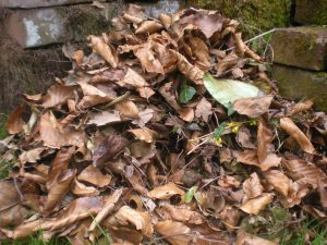 nest in leaf pile